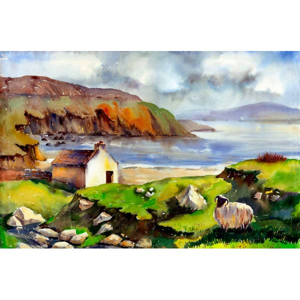 Wild Sheep - Achill Island